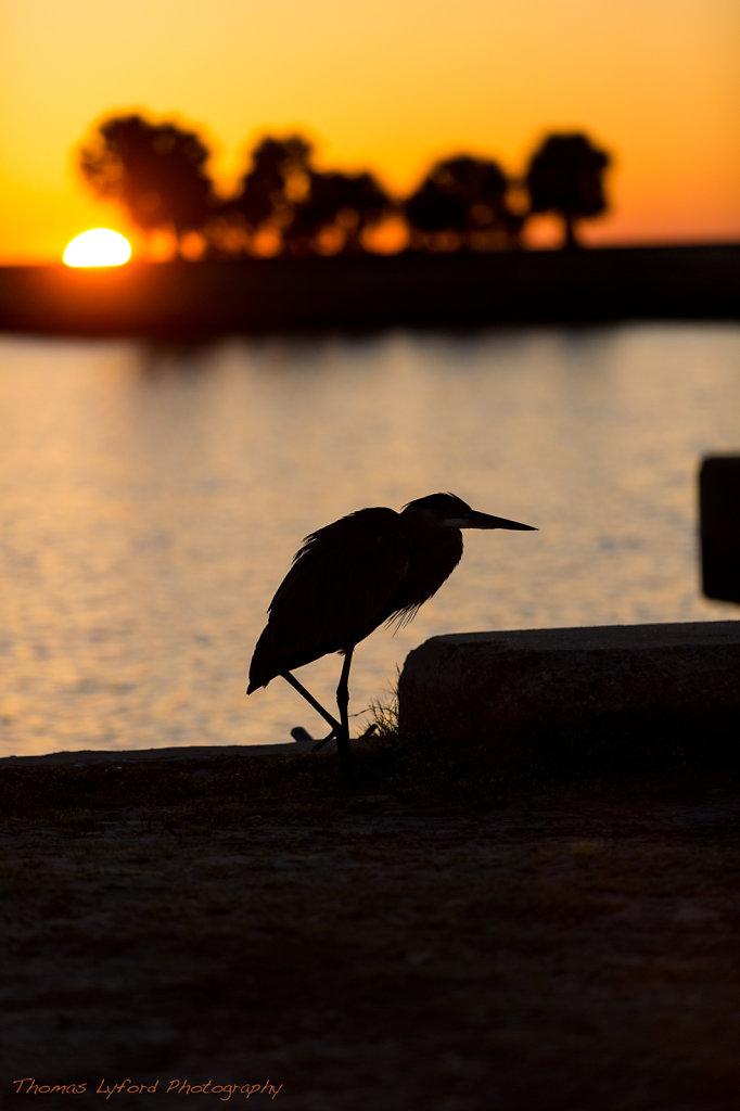 Bird & Island